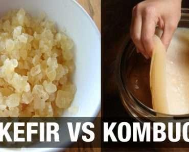 Kombucha ou Kefir : Qual a diferença?