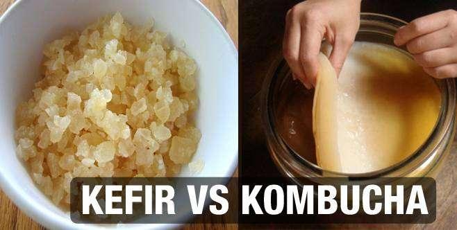 CAPA-1 Kombucha ou Kefir : Qual a diferença?