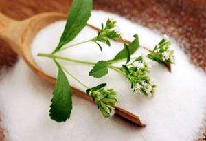 stevia Como Substituir o Açúcar